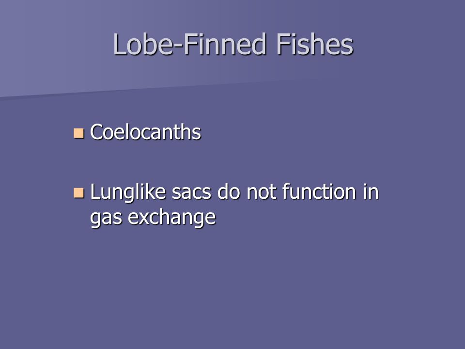 Lobe-Finned Fishes Coelocanths Coelocanths Lunglike sacs do not function in gas exchange Lunglike sacs do not function in gas exchange