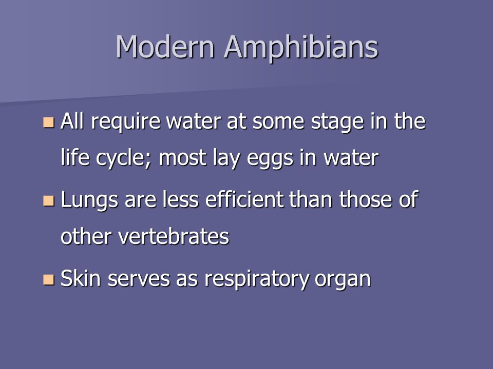 Modern Amphibians All require water at some stage in the life cycle; most lay eggs in water All require water at some stage in the life cycle; most lay eggs in water Lungs are less efficient than those of other vertebrates Lungs are less efficient than those of other vertebrates Skin serves as respiratory organ Skin serves as respiratory organ