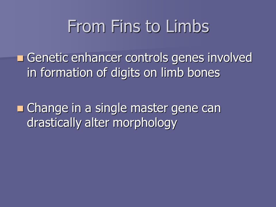 From Fins to Limbs Genetic enhancer controls genes involved in formation of digits on limb bones Genetic enhancer controls genes involved in formation of digits on limb bones Change in a single master gene can drastically alter morphology Change in a single master gene can drastically alter morphology