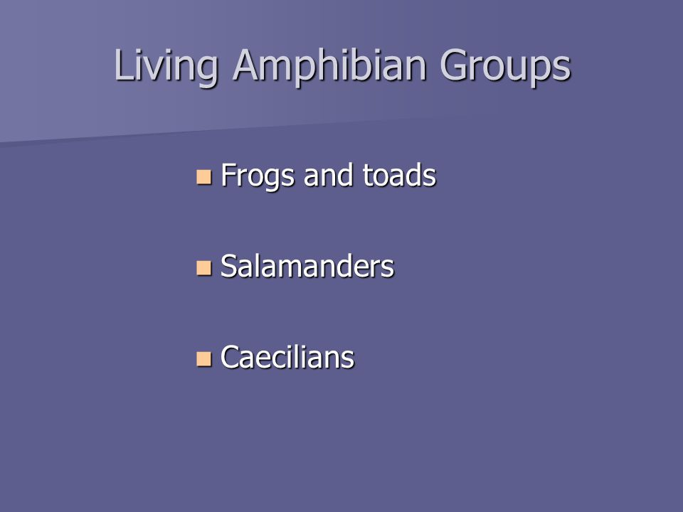 Living Amphibian Groups Frogs and toads Frogs and toads Salamanders Salamanders Caecilians Caecilians