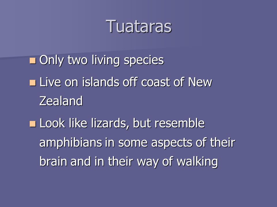 Tuataras Only two living species Only two living species Live on islands off coast of New Zealand Live on islands off coast of New Zealand Look like lizards, but resemble amphibians in some aspects of their brain and in their way of walking Look like lizards, but resemble amphibians in some aspects of their brain and in their way of walking