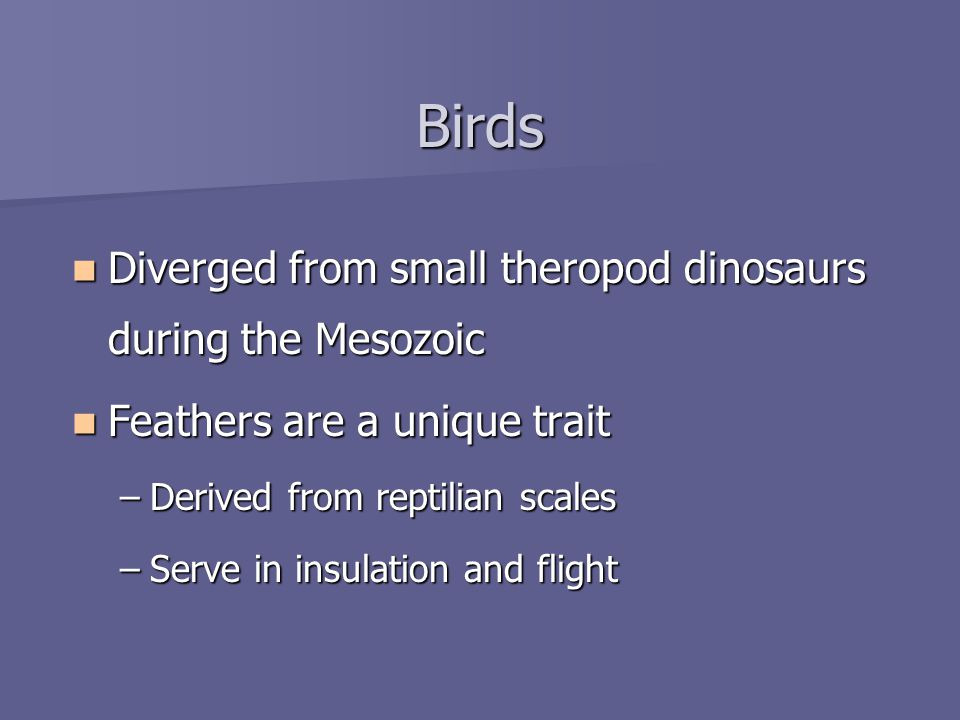 Birds Diverged from small theropod dinosaurs during the Mesozoic Diverged from small theropod dinosaurs during the Mesozoic Feathers are a unique trait Feathers are a unique trait –Derived from reptilian scales –Serve in insulation and flight