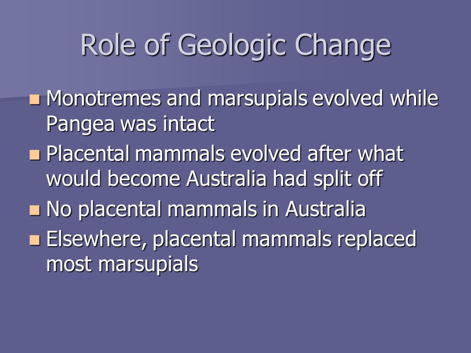 Role of Geologic Change Monotremes and marsupials evolved while Pangea was intact Monotremes and marsupials evolved while Pangea was intact Placental mammals evolved after what would become Australia had split off Placental mammals evolved after what would become Australia had split off No placental mammals in Australia No placental mammals in Australia Elsewhere, placental mammals replaced most marsupials Elsewhere, placental mammals replaced most marsupials
