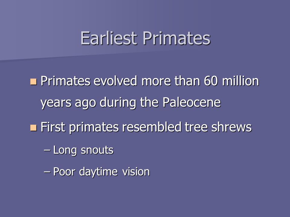 Earliest Primates Primates evolved more than 60 million years ago during the Paleocene Primates evolved more than 60 million years ago during the Paleocene First primates resembled tree shrews First primates resembled tree shrews –Long snouts –Poor daytime vision