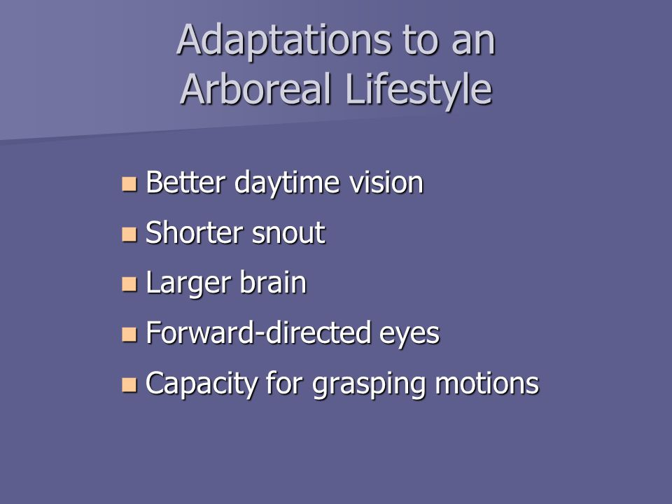 Adaptations to an Arboreal Lifestyle Better daytime vision Better daytime vision Shorter snout Shorter snout Larger brain Larger brain Forward-directed eyes Forward-directed eyes Capacity for grasping motions Capacity for grasping motions