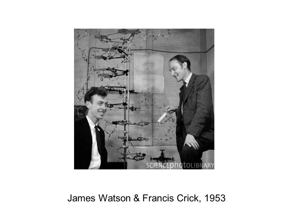 James Watson & Francis Crick, 1953