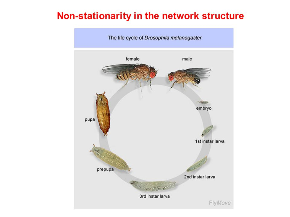 Non-stationarity in the network structure