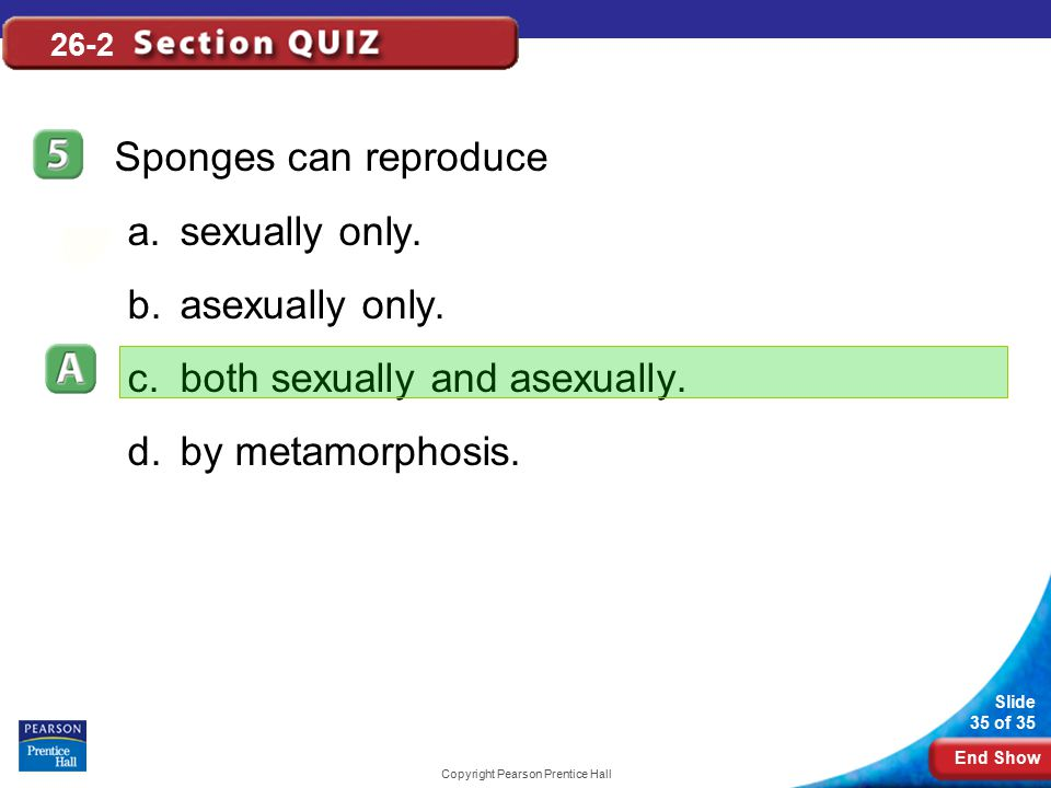 End Show Slide 35 of 35 Copyright Pearson Prentice Hall 26-2 Sponges can reproduce a.sexually only. b.asexually only. c.both sexually and asexually. d