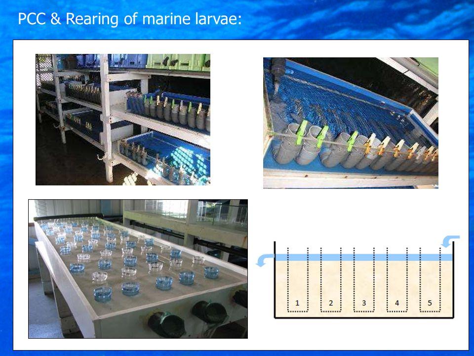 PCC & Rearing of marine larvae: