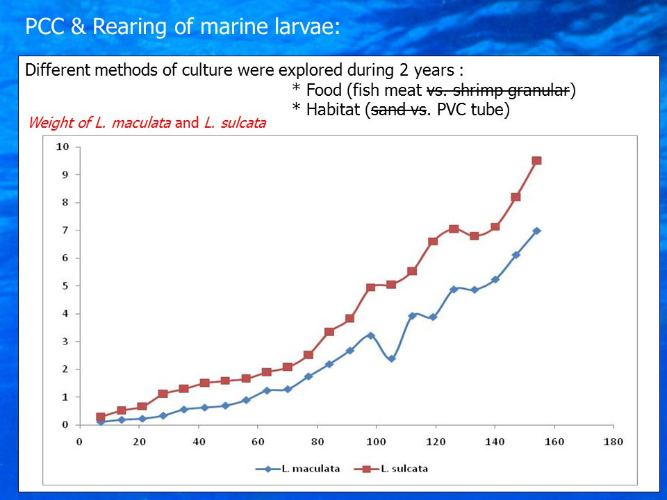 Different methods of culture were explored during 2 years : * Food (fish meat vs.
