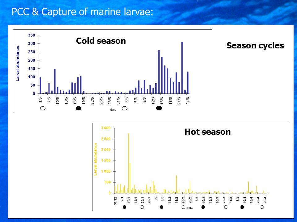 Season cycles Cold season Hot season PCC & Capture of marine larvae: