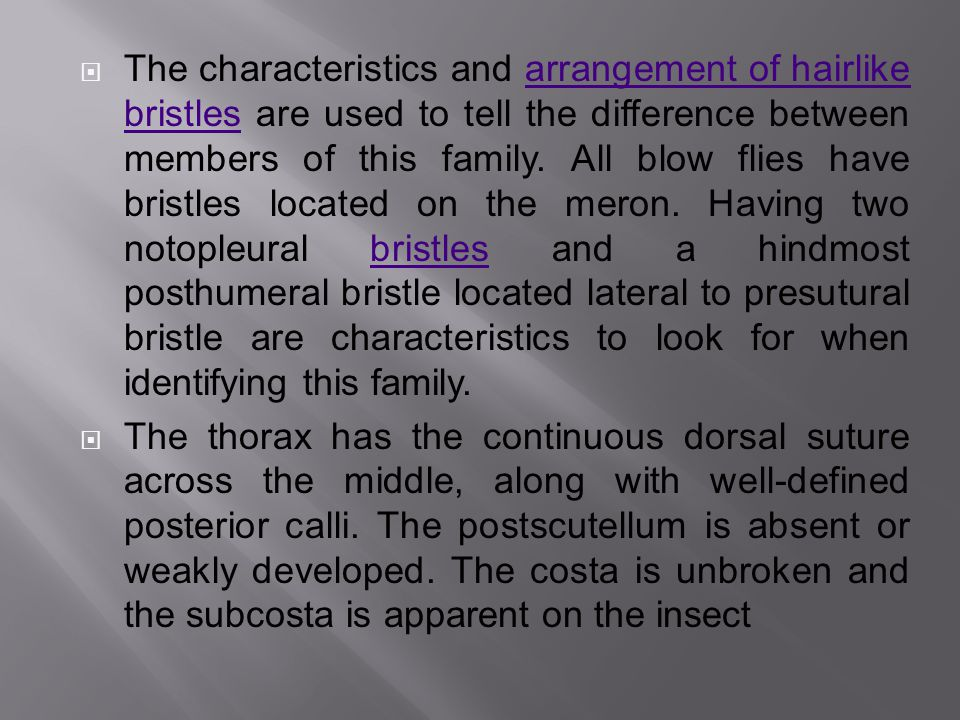  The characteristics and arrangement of hairlike bristles are used to tell the difference between members of this family.
