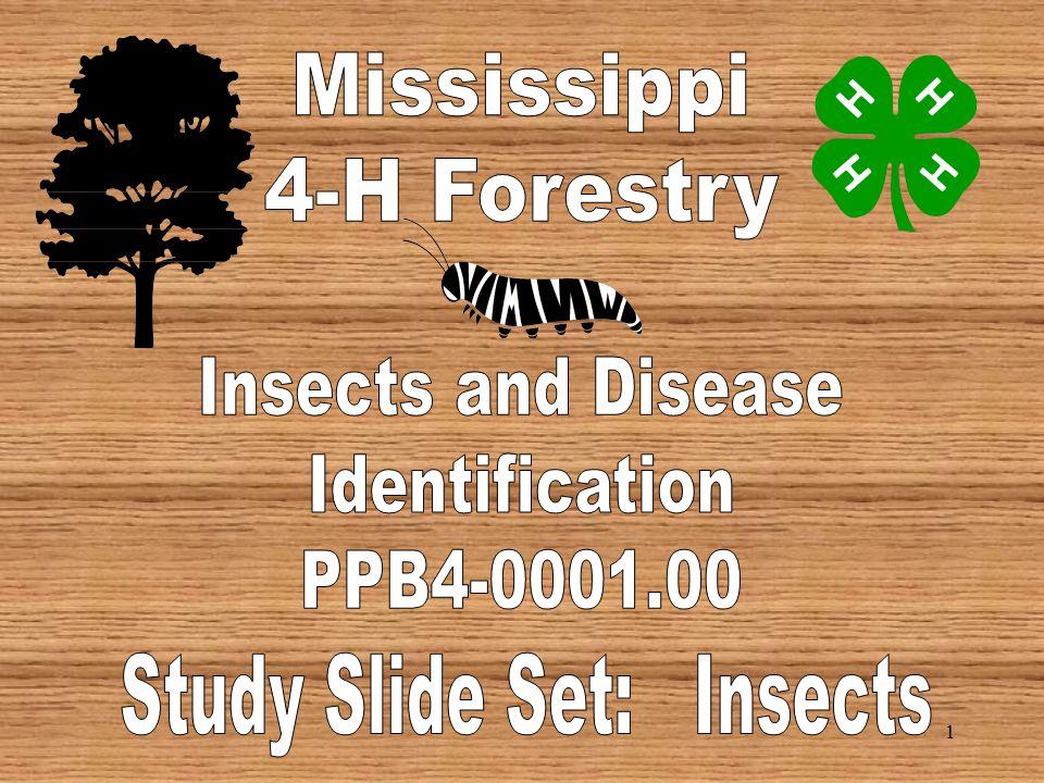 61 BBB Larvae