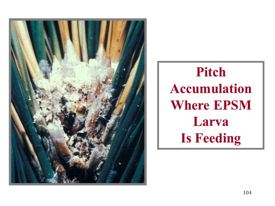 103 EPSM Damage On Pine Twig