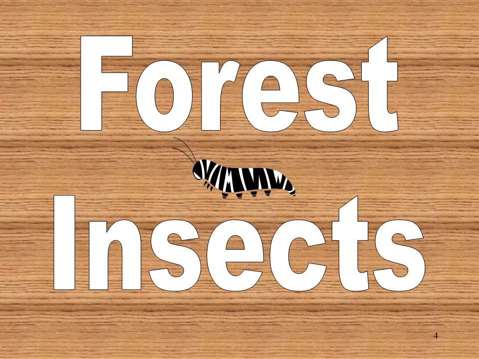 44 Texas Leaf Cutting Ant