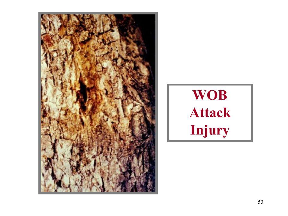52 Borer Injury