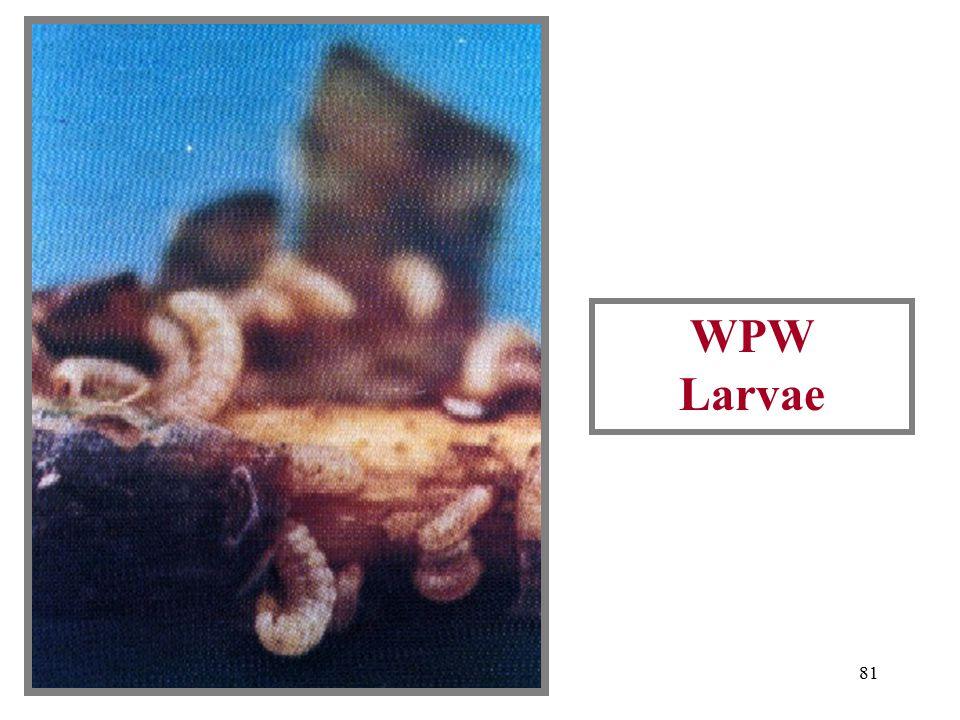 80 WPW Damage