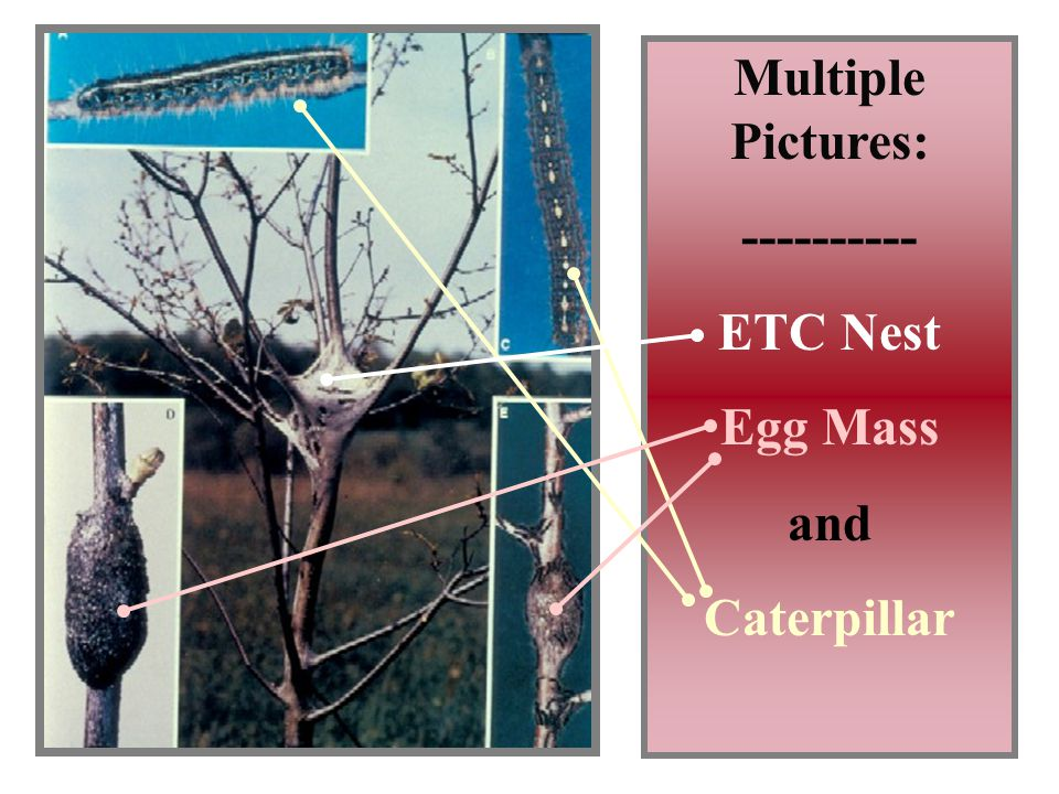 9 Multiple Pictures: ---------- ETC Nest Egg Mass and Caterpillar