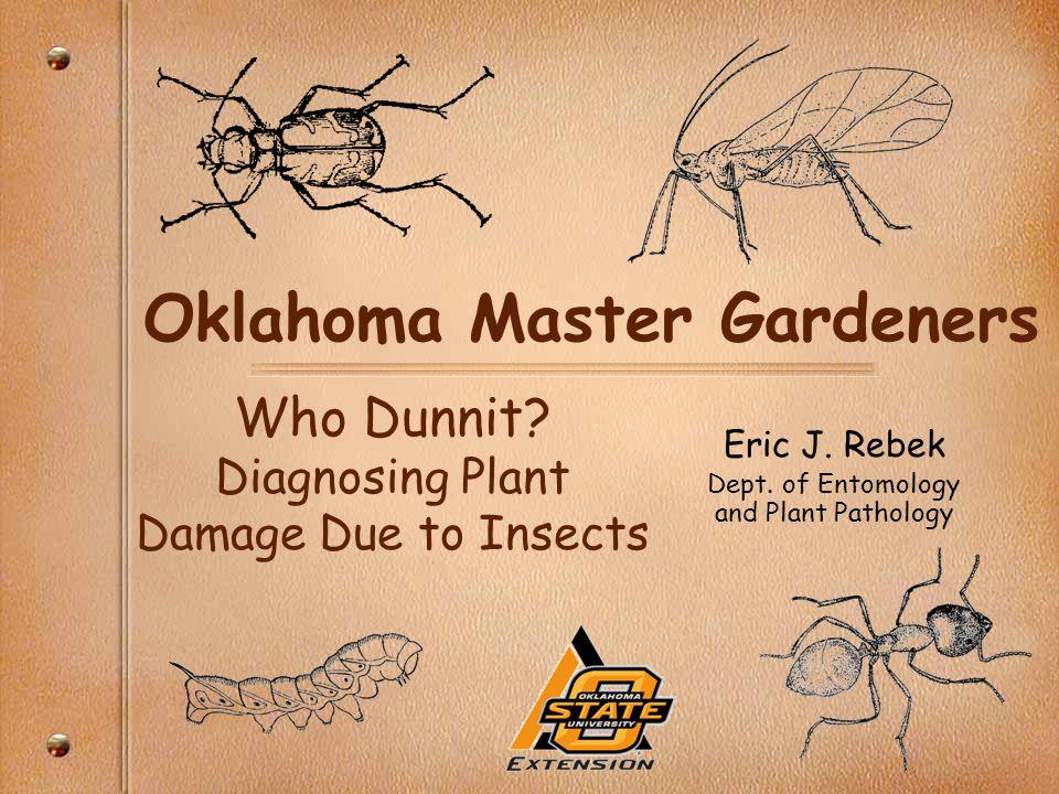 Oklahoma State UniversityOklahoma Master Gardeners What kind of damage is this?