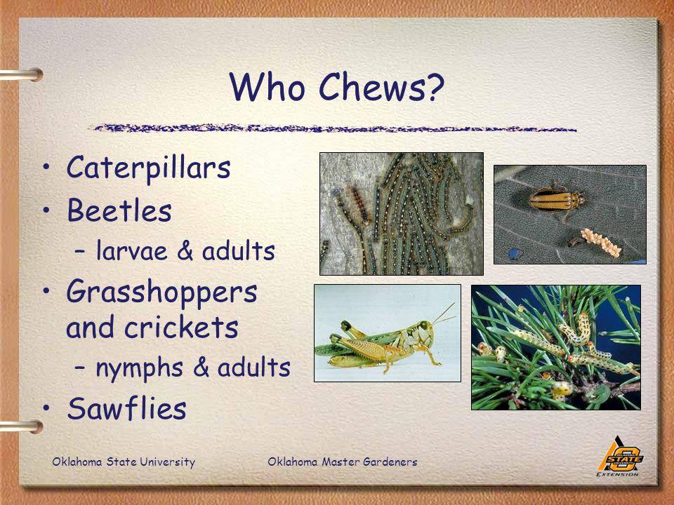 Oklahoma State UniversityOklahoma Master Gardeners Who Chews.