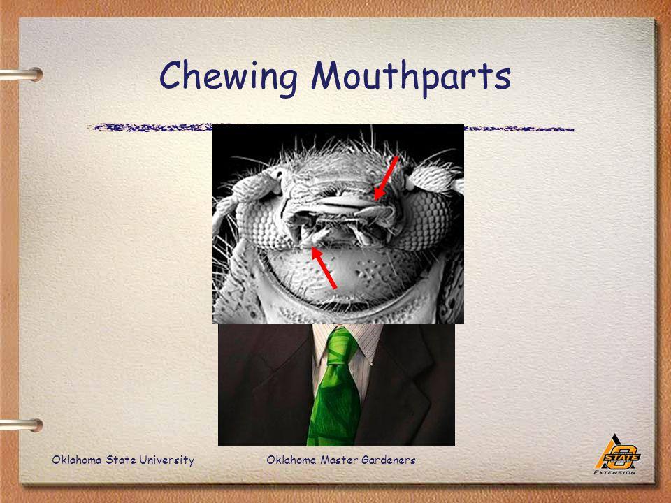 Oklahoma State UniversityOklahoma Master Gardeners Chewing Mouthparts