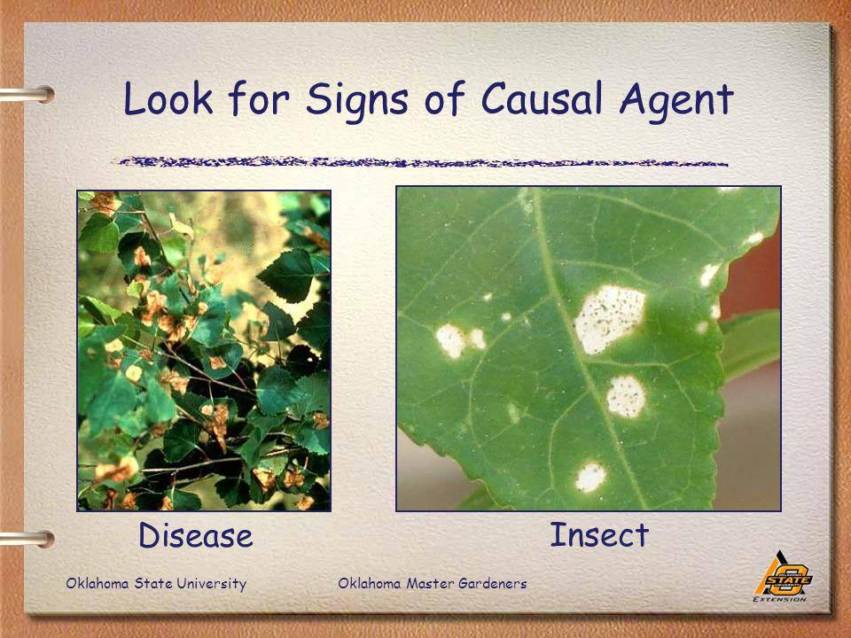 Oklahoma State UniversityOklahoma Master Gardeners Look for Signs of Causal Agent