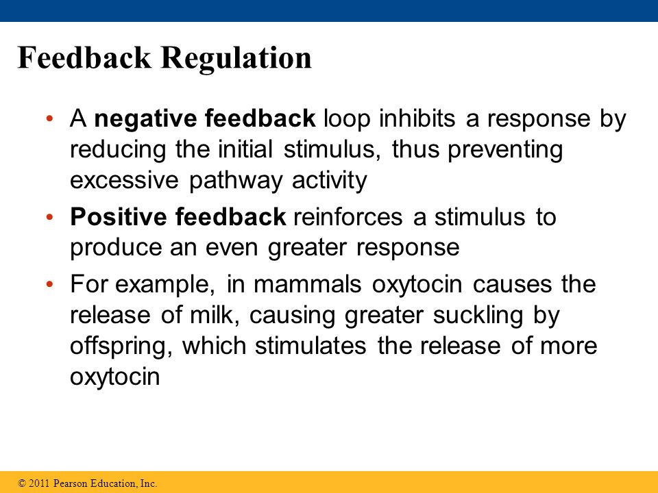 A negative feedback loop inhibits a response by reducing the initial stimulus, thus preventing excessive pathway activity Positive feedback reinforces