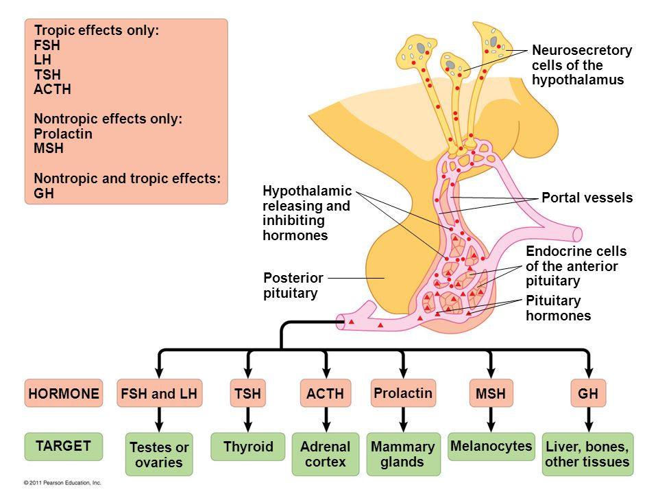 Tropic effects only: FSH LH TSH ACTH Nontropic effects only: Prolactin MSH Nontropic and tropic effects: GH Hypothalamic releasing and inhibiting horm