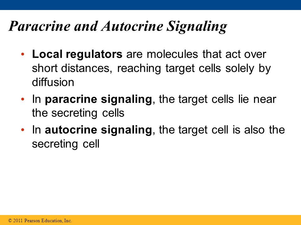Paracrine and Autocrine Signaling Local regulators are molecules that act over short distances, reaching target cells solely by diffusion In paracrine