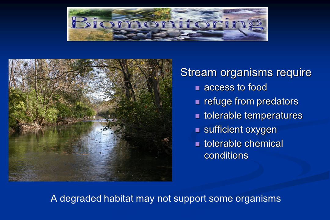 Stream organisms require access to food access to food refuge from predators refuge from predators tolerable temperatures tolerable temperatures sufficient oxygen sufficient oxygen tolerable chemical conditions tolerable chemical conditions A degraded habitat may not support some organisms