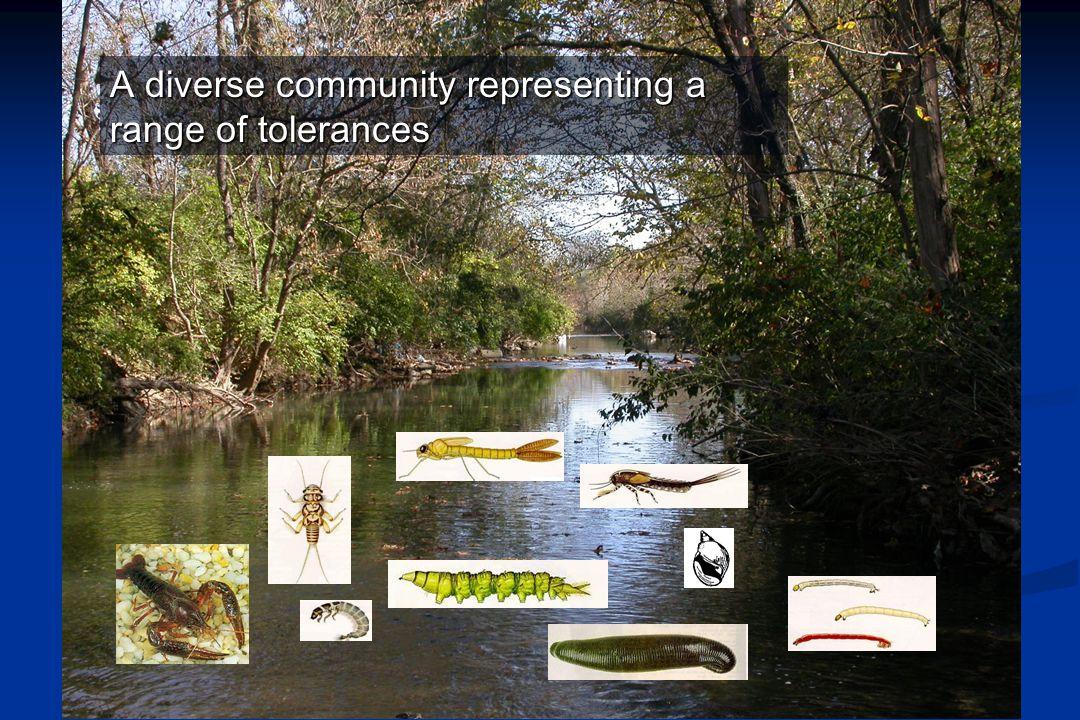 A diverse community representing a range of tolerances