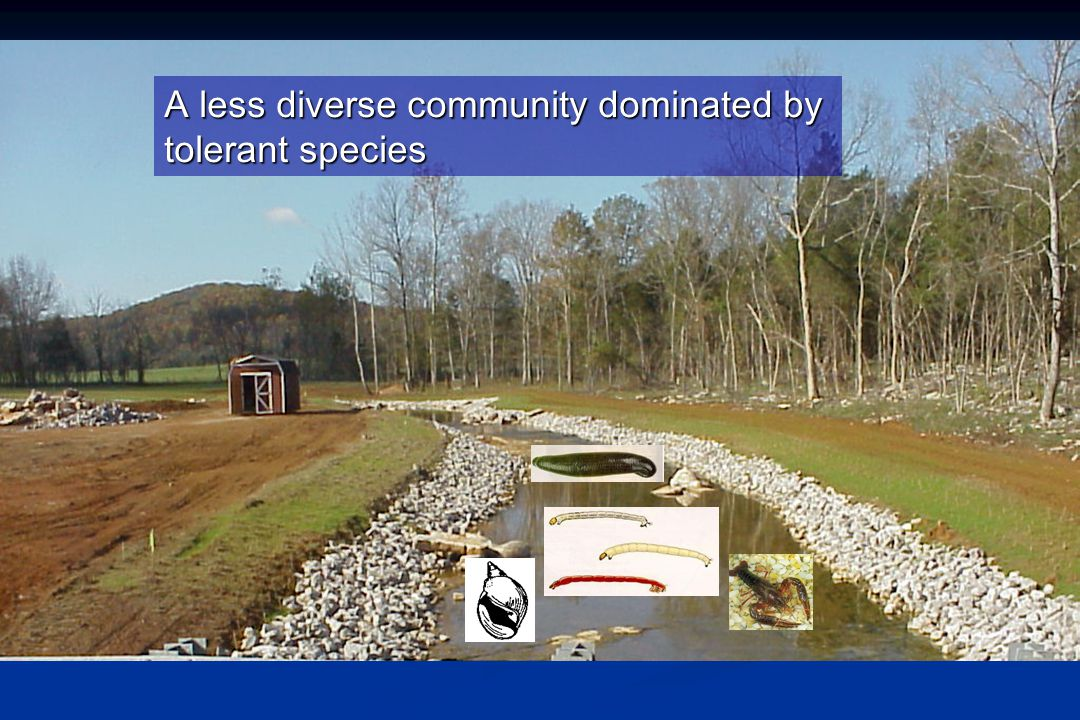 A less diverse community dominated by tolerant species