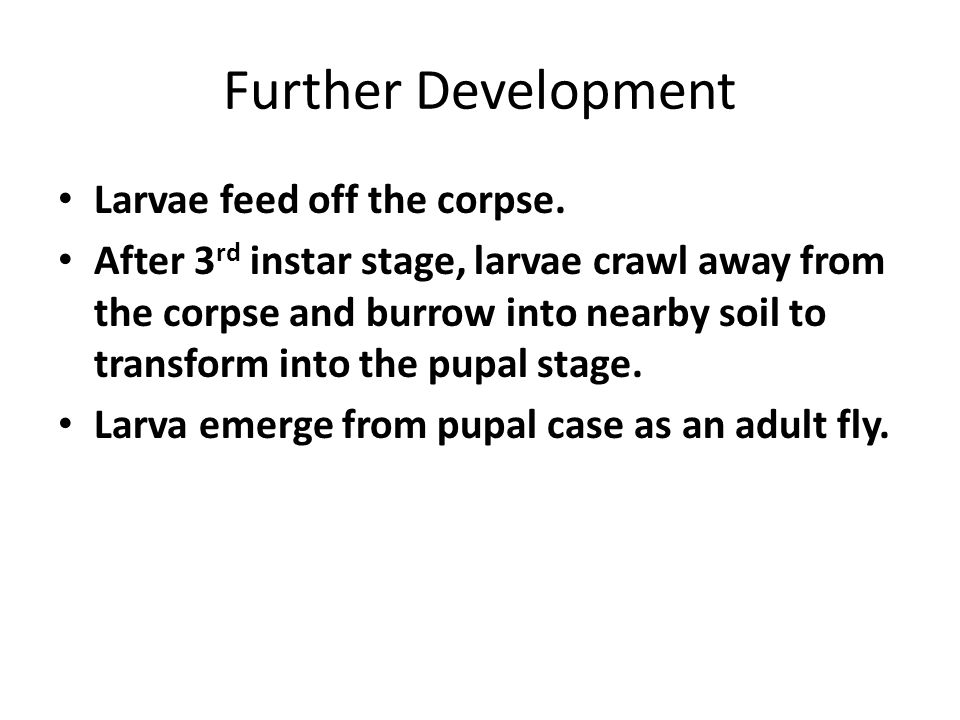 Further Development Larvae feed off the corpse. After 3 rd instar stage, larvae crawl away from the corpse and burrow into nearby soil to transform in