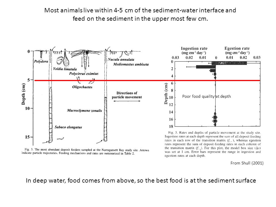 From Shull (2001) Most animals live within 4-5 cm of the sediment-water interface and feed on the sediment in the upper most few cm.