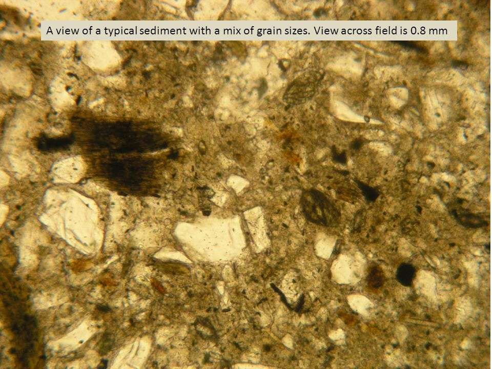 A view of a typical sediment with a mix of grain sizes. View across field is 0.8 mm