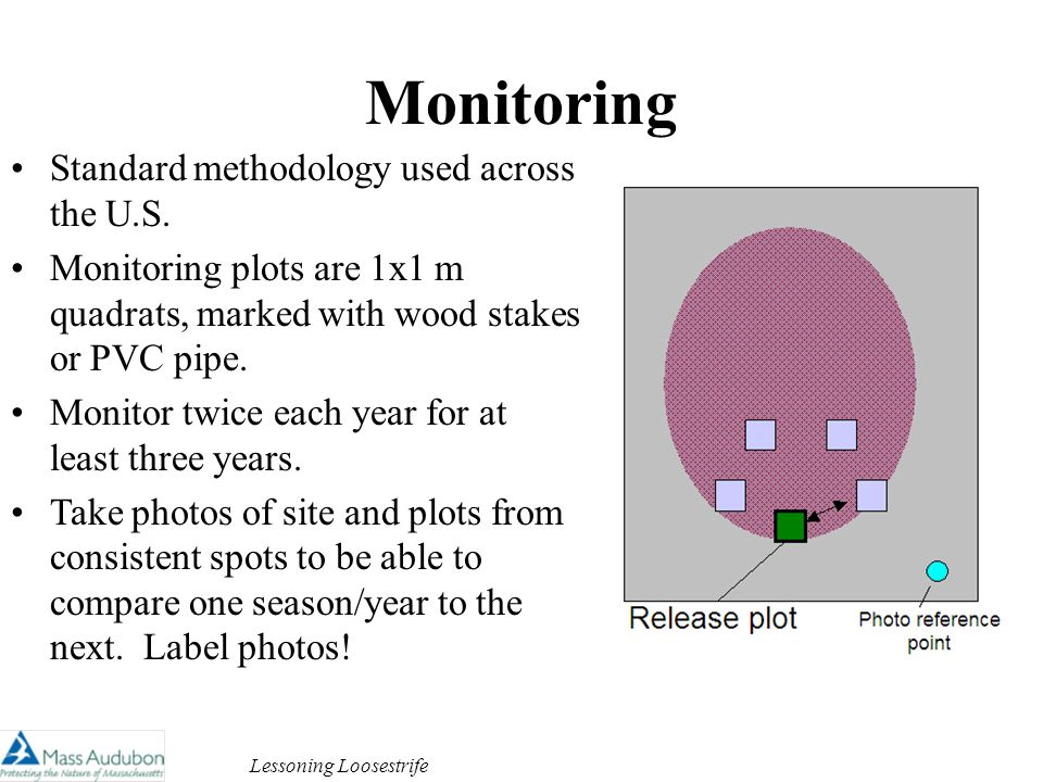 Lessoning Loosestrife Monitoring Standard methodology used across the U.S.