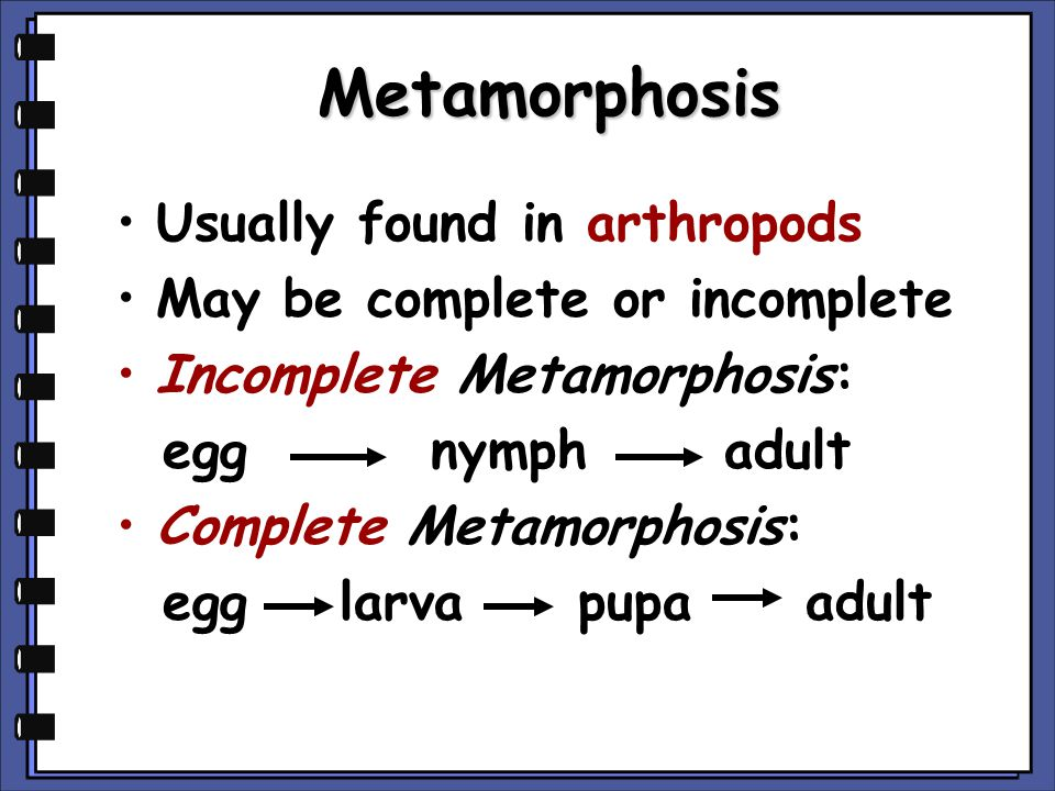 Metamorphosis COMPLETE INCOMPLETE