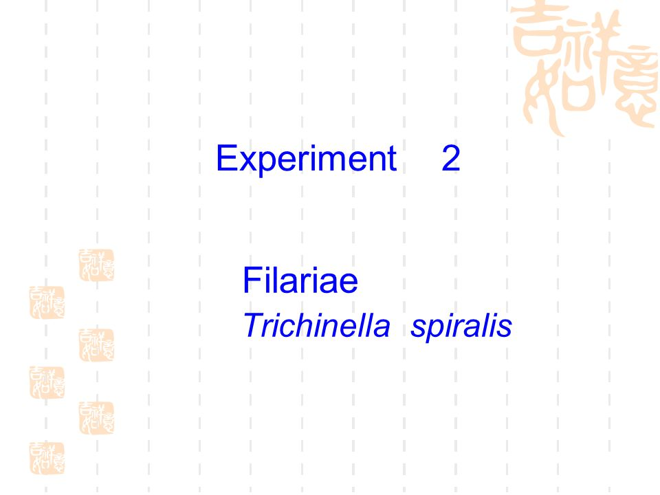 Morphological Differences of Microfilariae between W.
