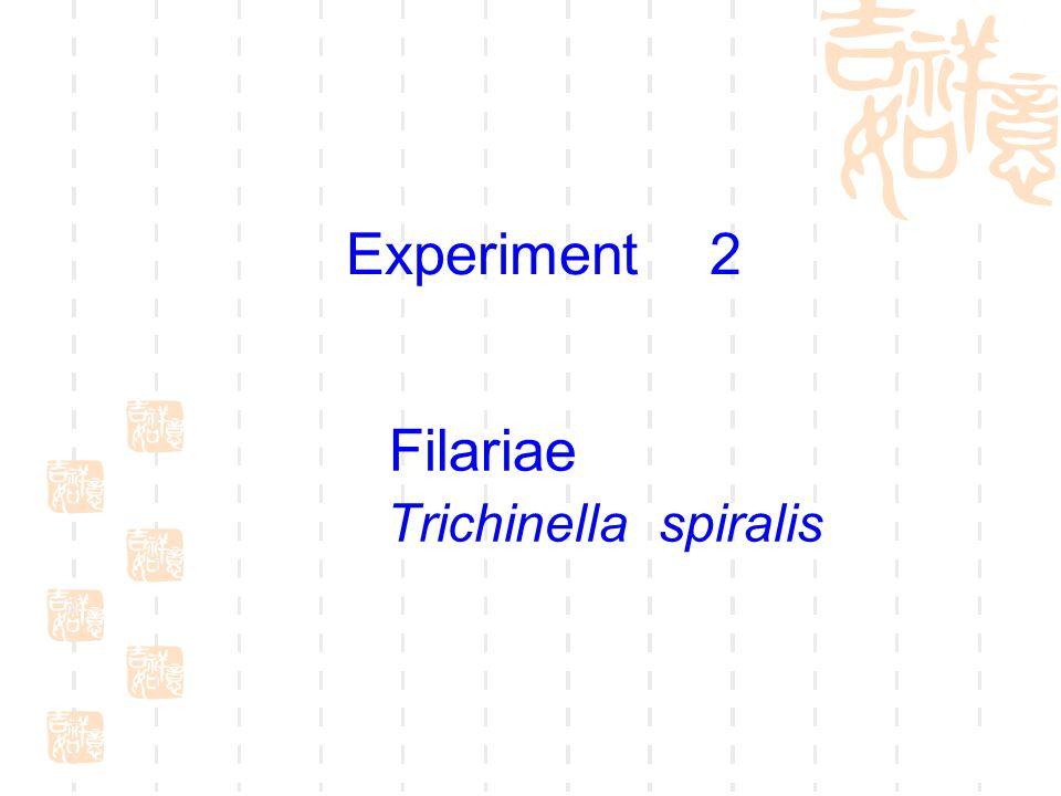 Filariae Trichinella spiralis Experiment 2