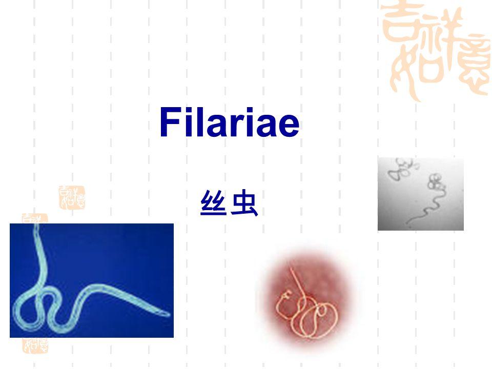 Filariae 丝虫