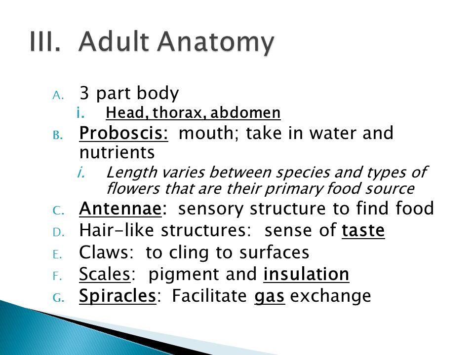 A. 3 part body i.Head, thorax, abdomen B.
