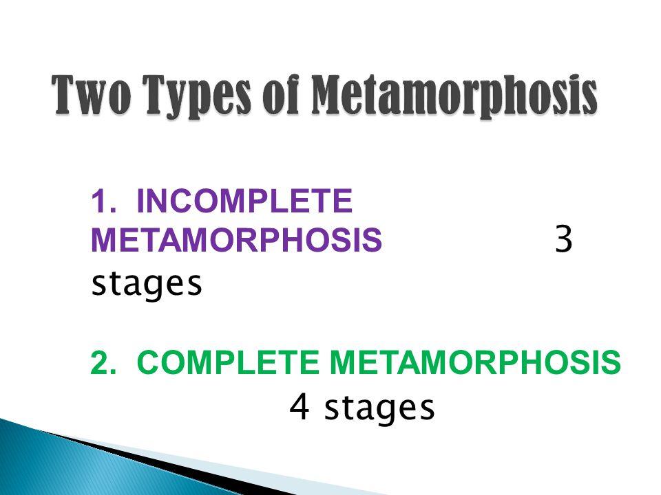 1. INCOMPLETE METAMORPHOSIS 3 stages 2. COMPLETE METAMORPHOSIS 4 stages