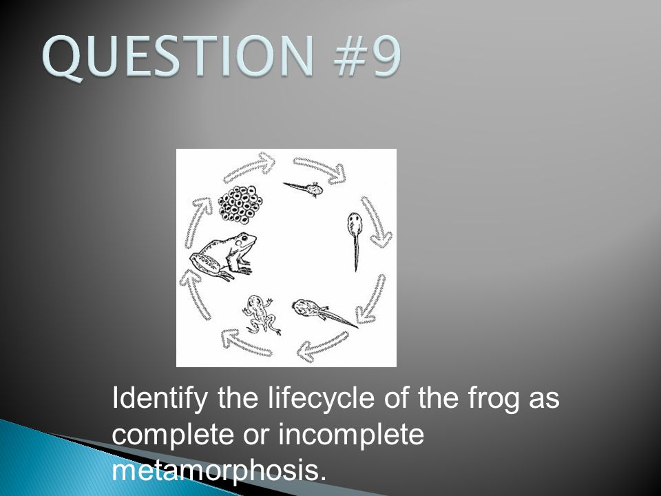 Identify the lifecycle of the frog as complete or incomplete metamorphosis.