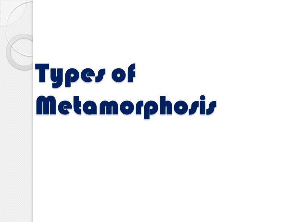 Types of Metamorphosis