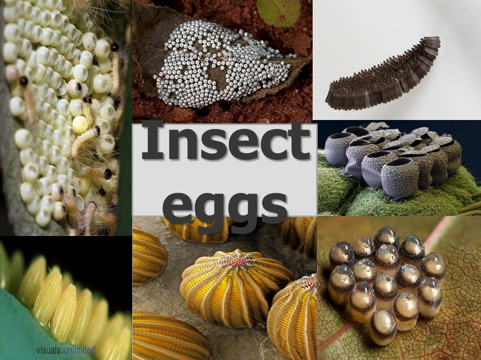 Insect eggs have various shapes.Some are conical, others are elliptical or hemispherical.