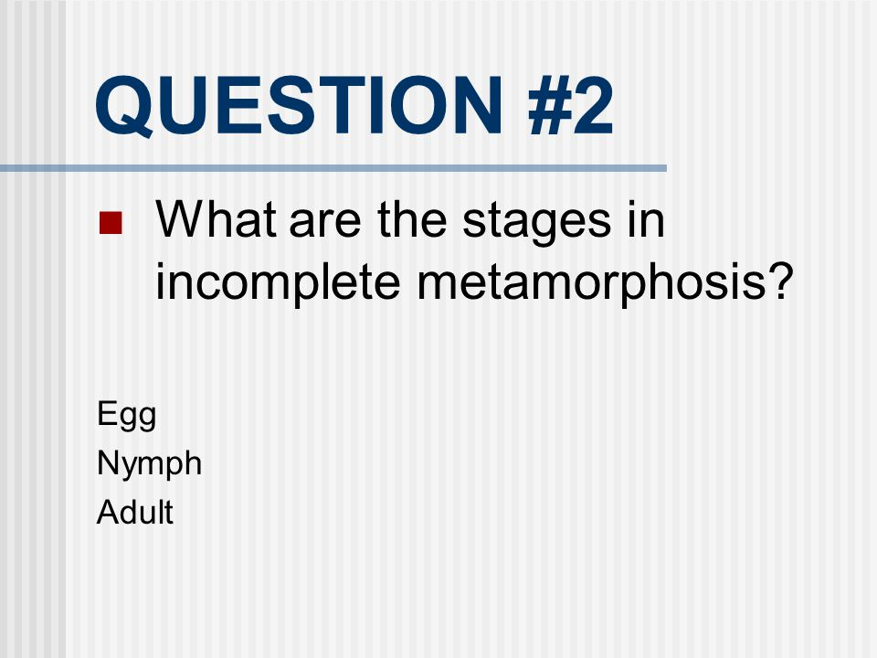 QUESTION #2 What are the stages in incomplete metamorphosis? Egg Nymph Adult