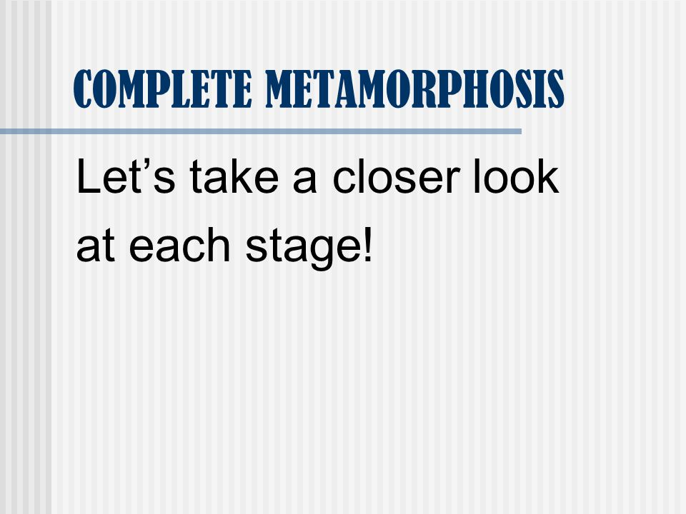 QUESTION #4 How many stages are there in complete metamorphosis? Answer: 4