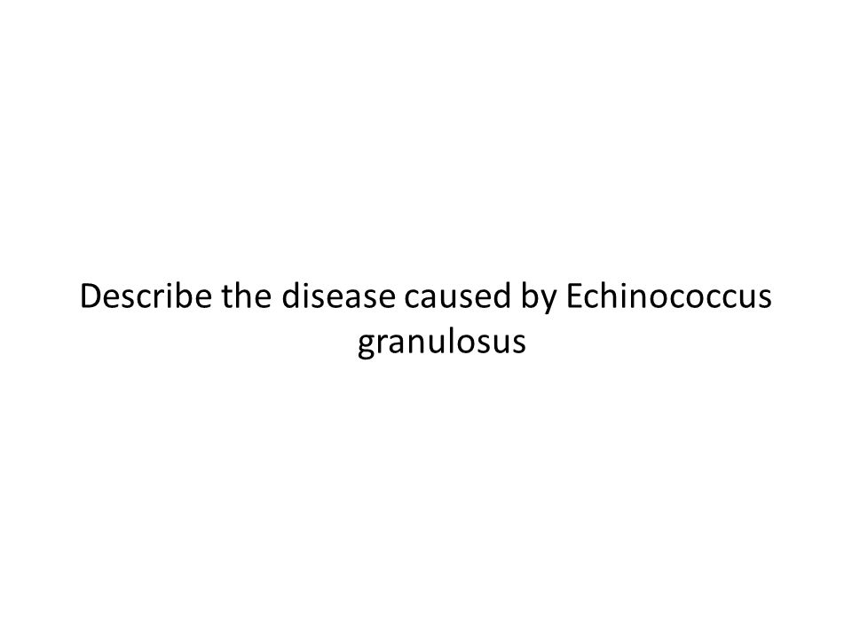 Describe the disease caused by Echinococcus granulosus