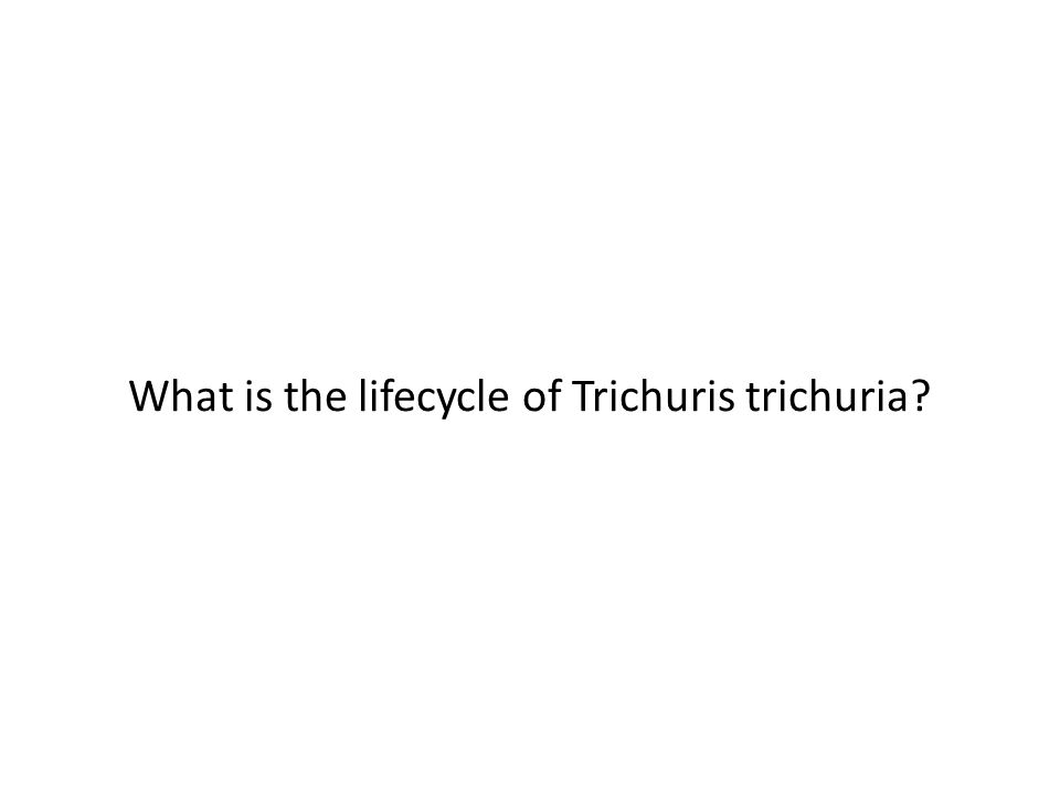 What is the lifecycle of Trichuris trichuria