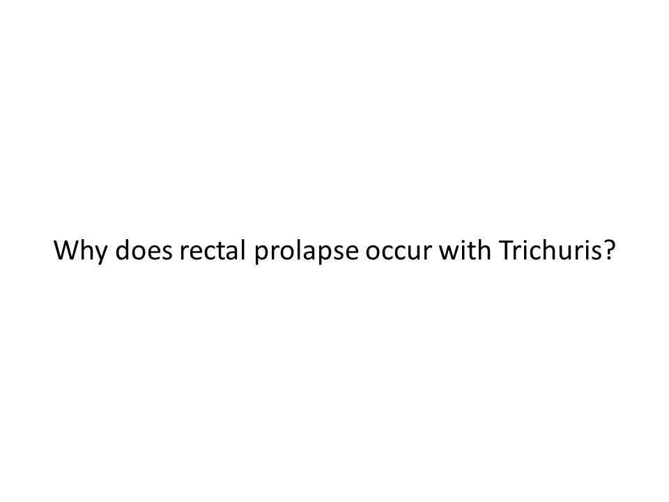 Why does rectal prolapse occur with Trichuris